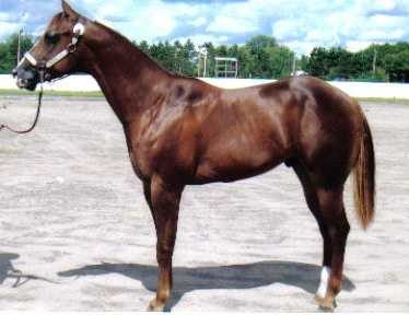 AQHA For Sale