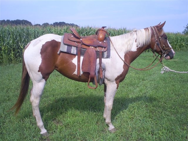 2004 APHA Sorrel Tobiano For Sale